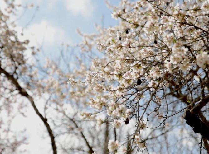 Primavera en el Palacio de Galiana (Toledo-España)